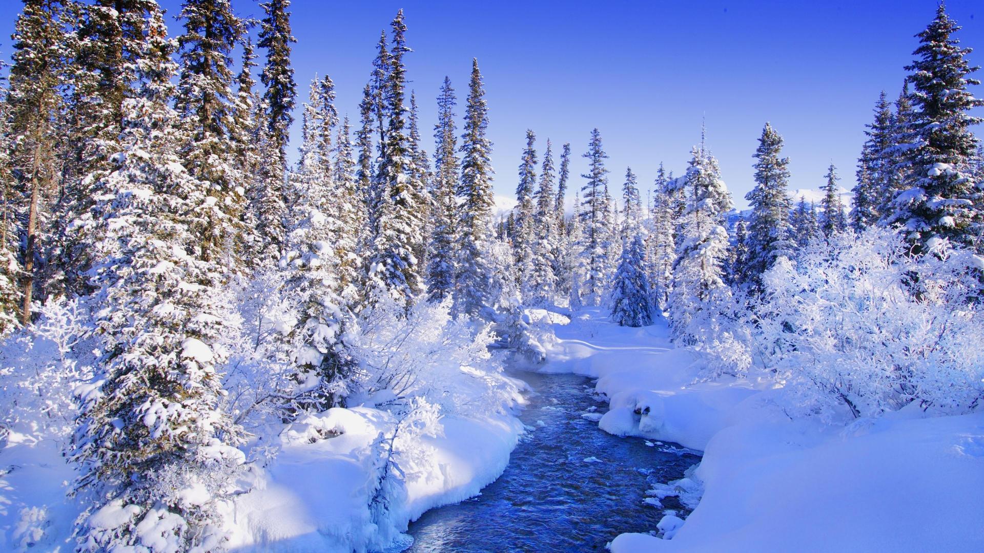 разговаривают вами обои хорошего качества на зиму рук покрываются