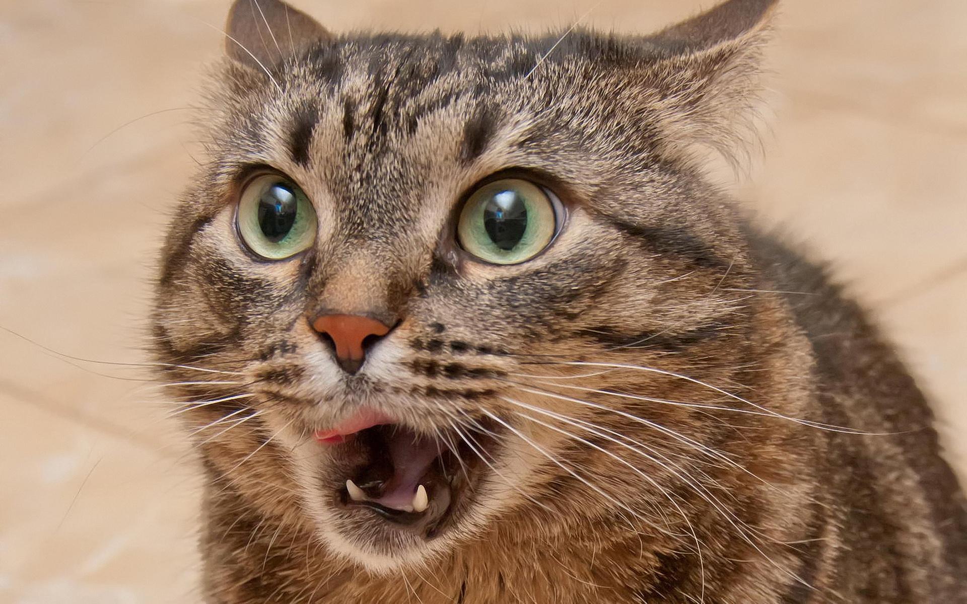 Удивленные котенки  № 1097812  скачать