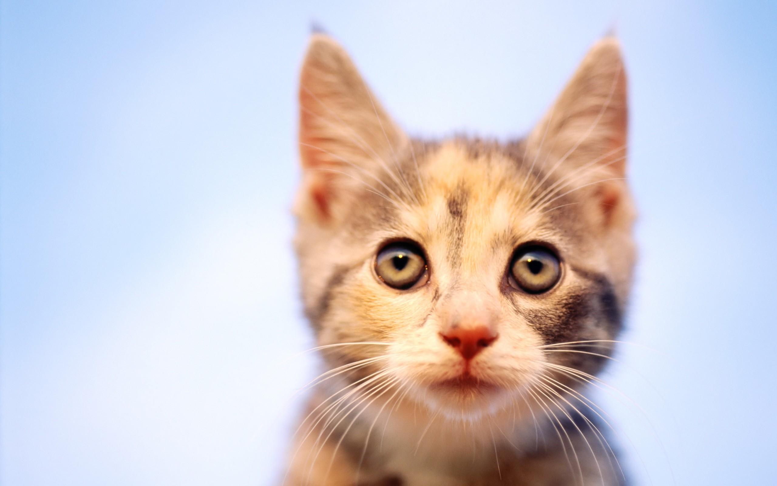 Кот взгляд без смс