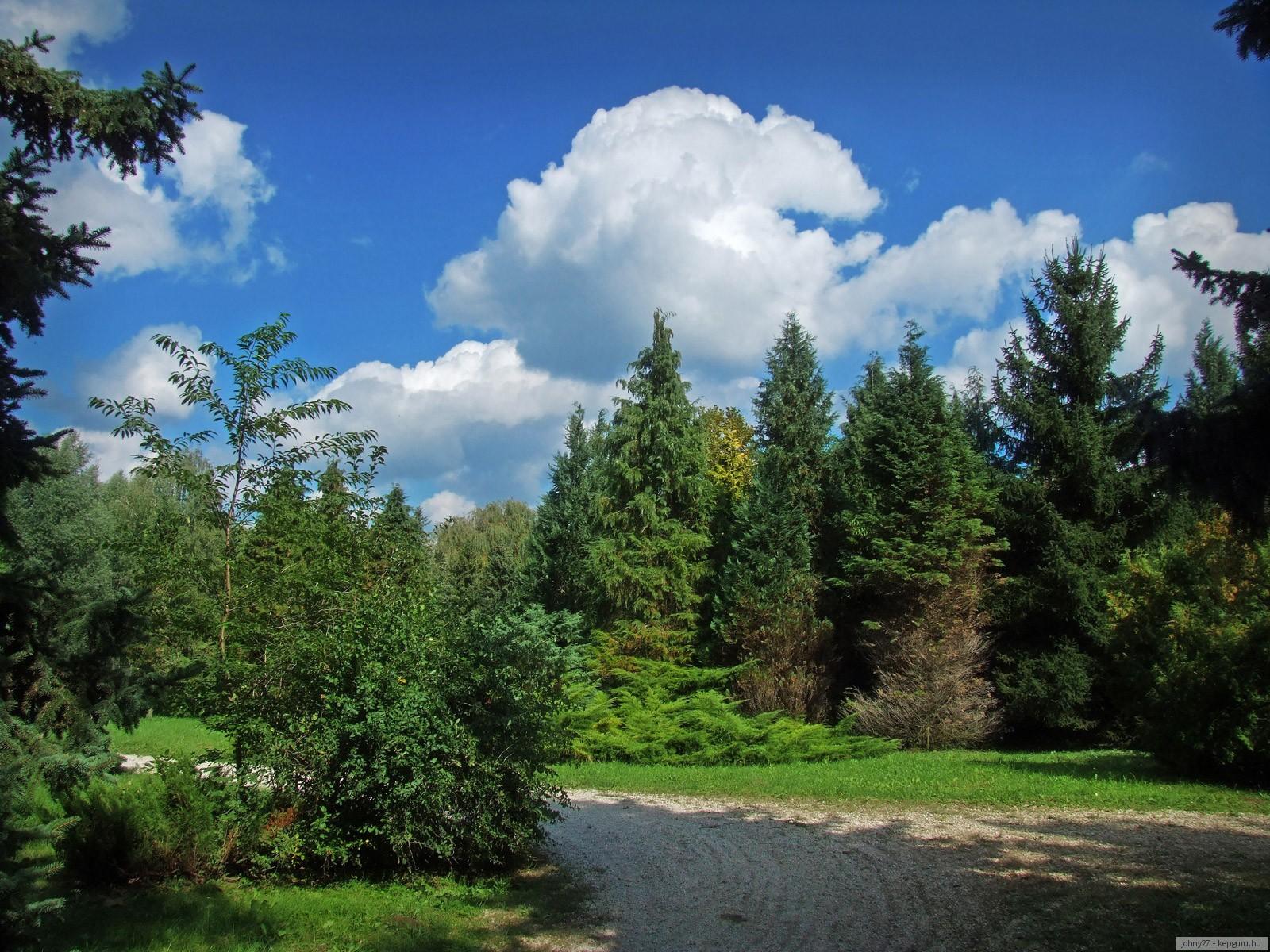 изображение леса:
