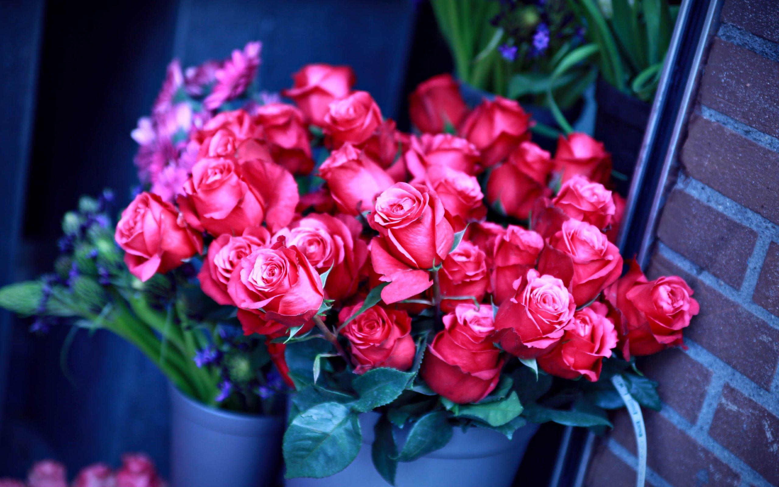 розы букет rose bouquet бесплатно