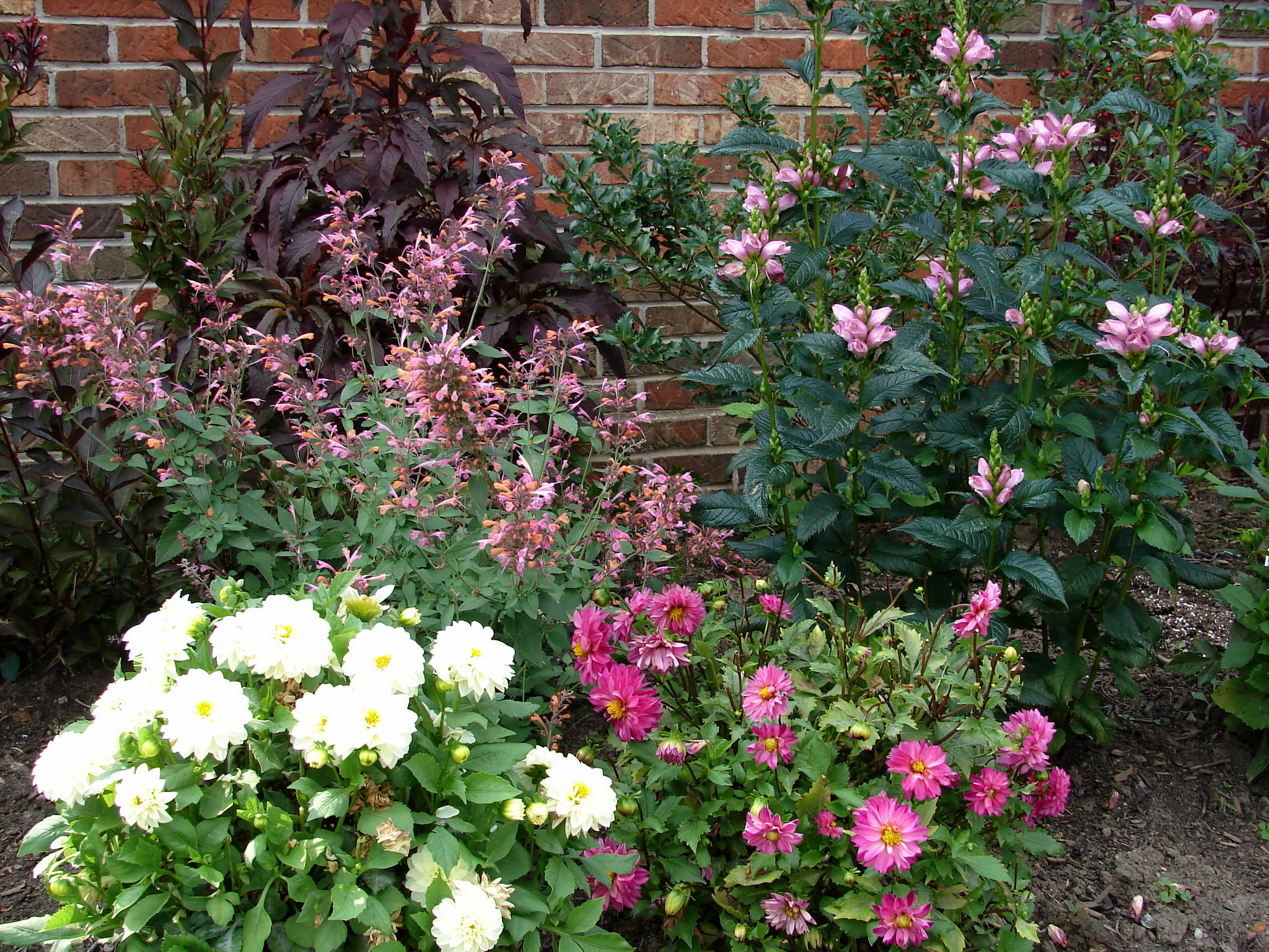картинки сад цветов: