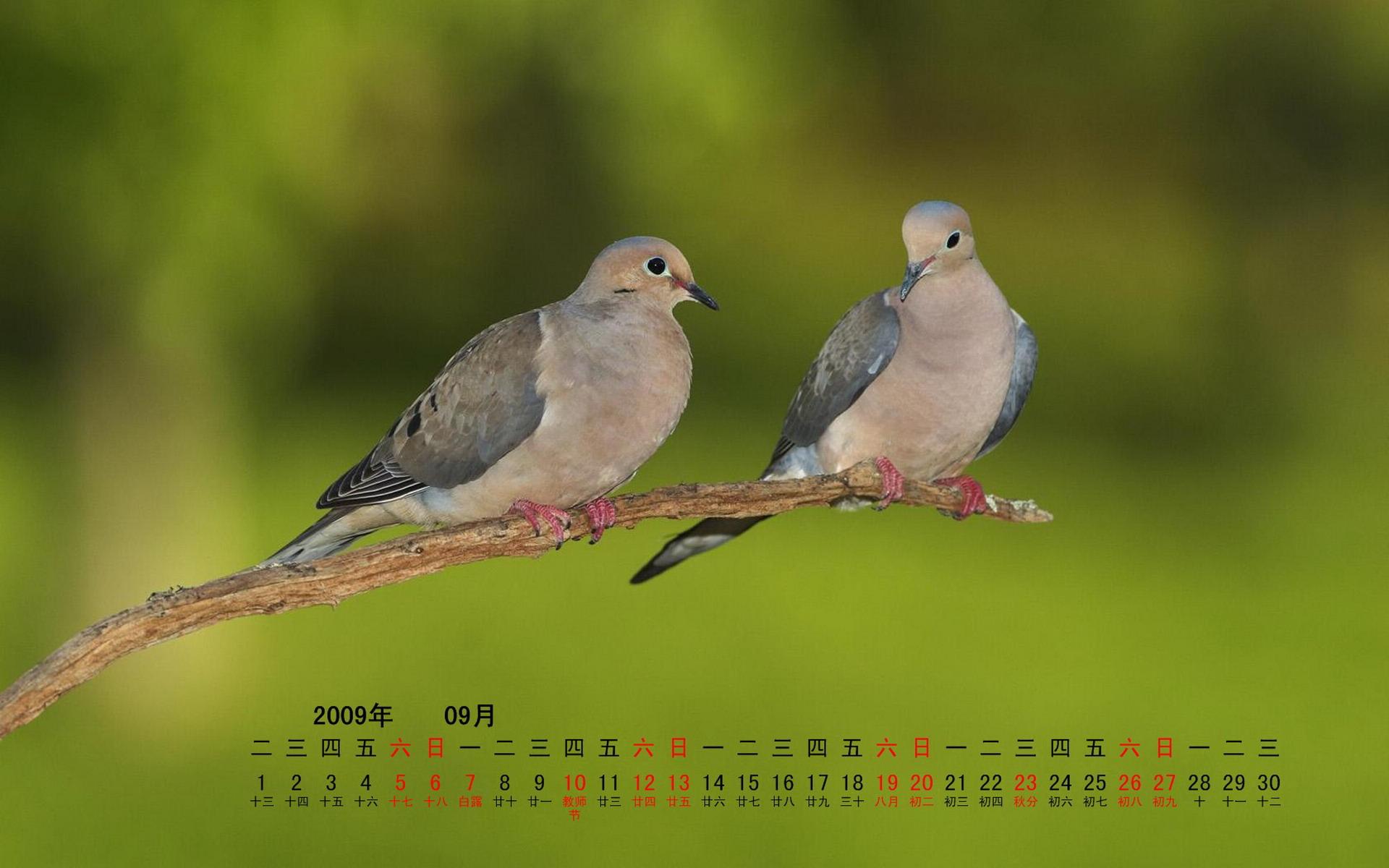 природа белые птицы ветка голуби  № 592532  скачать