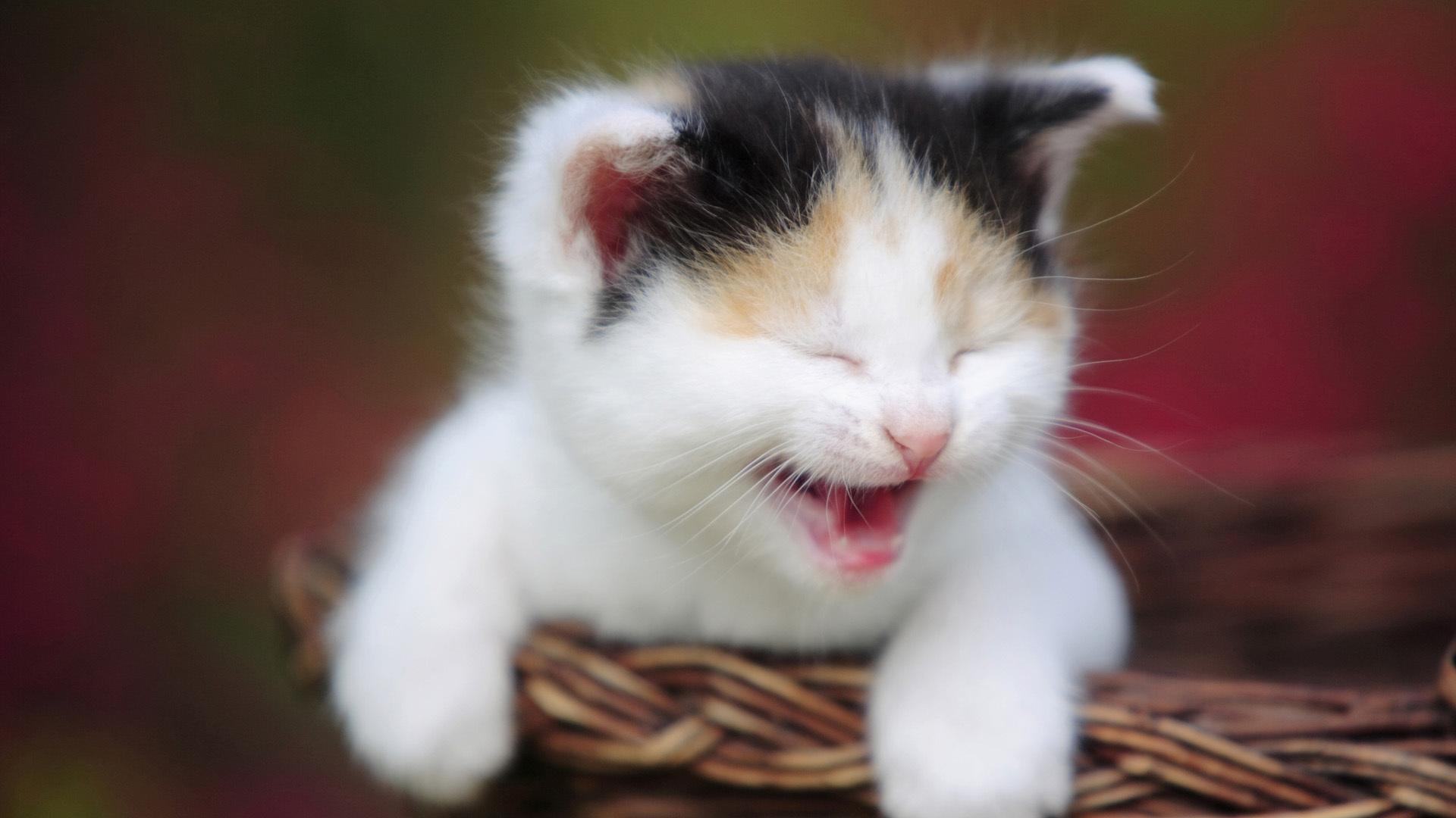 мордочка котенка в хорошем качестве