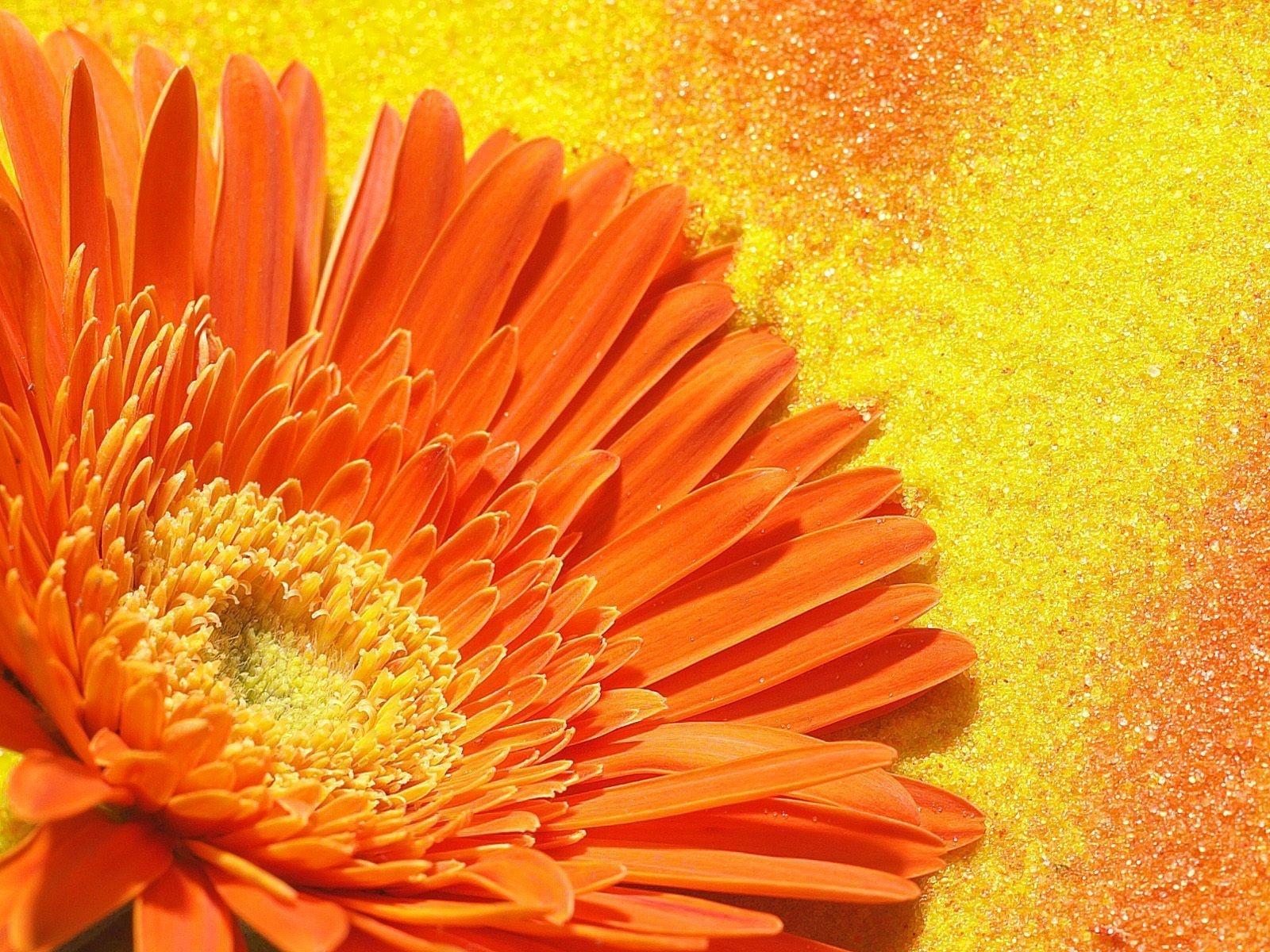 оранжево-красный цветок скачать