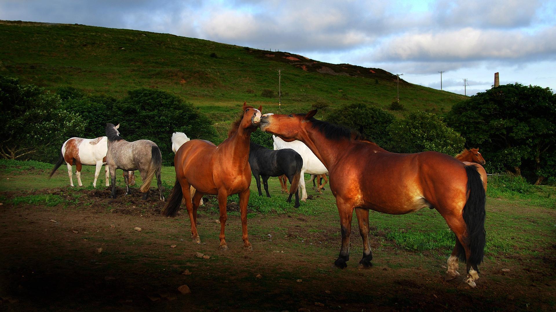лошадь конь лес поляна  № 99108 без смс
