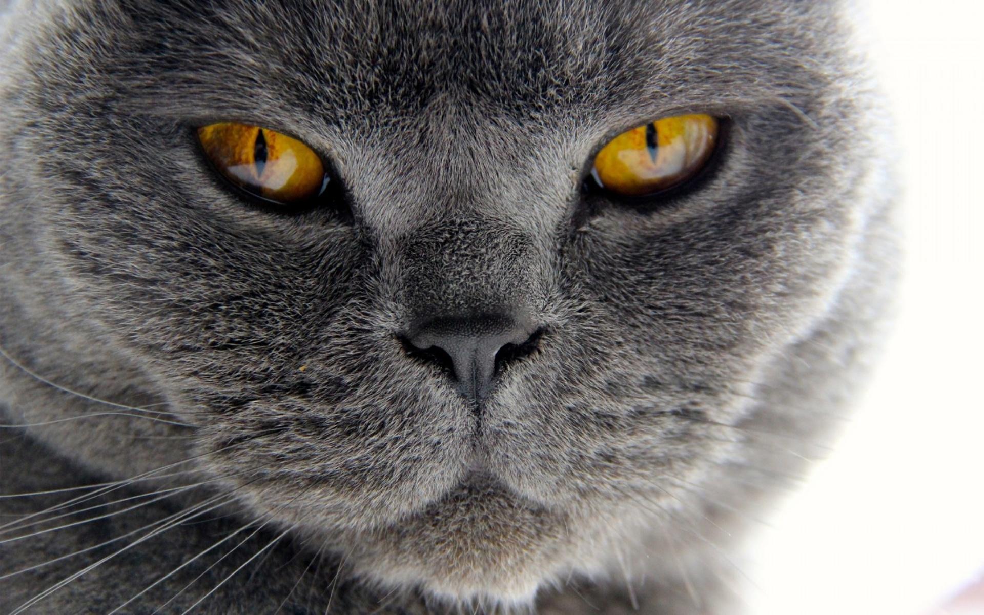 хитрый котенок бесплатно