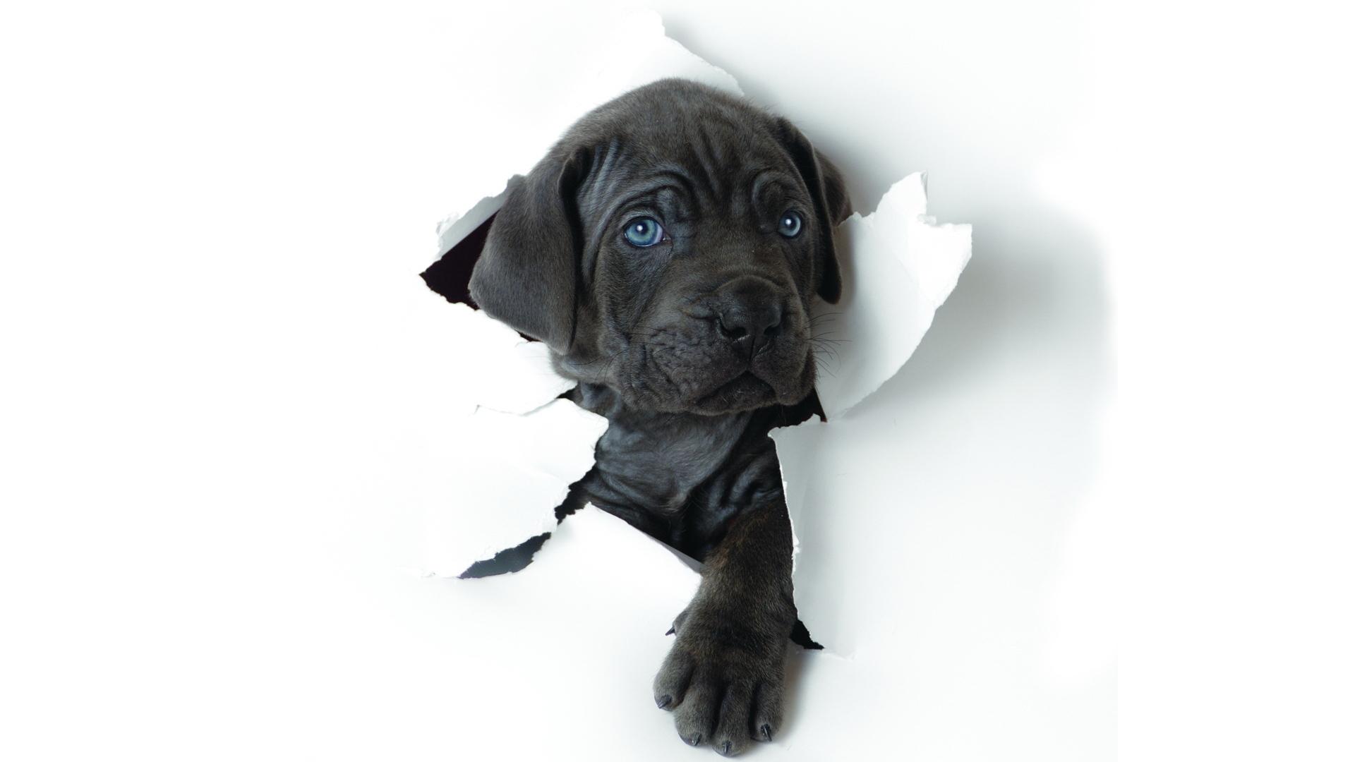 Собака черно-белый в хорошем качестве