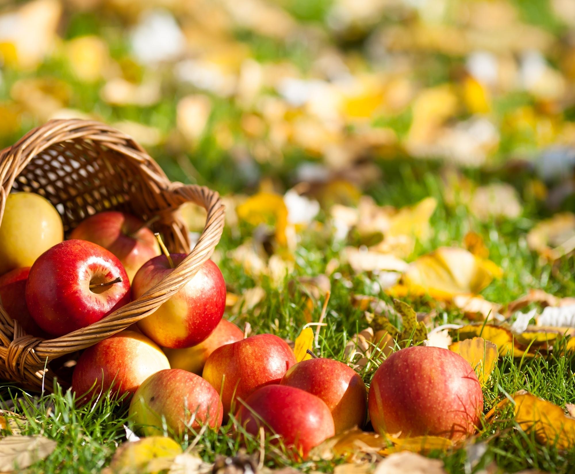 Яблоко в корзинке бесплатно