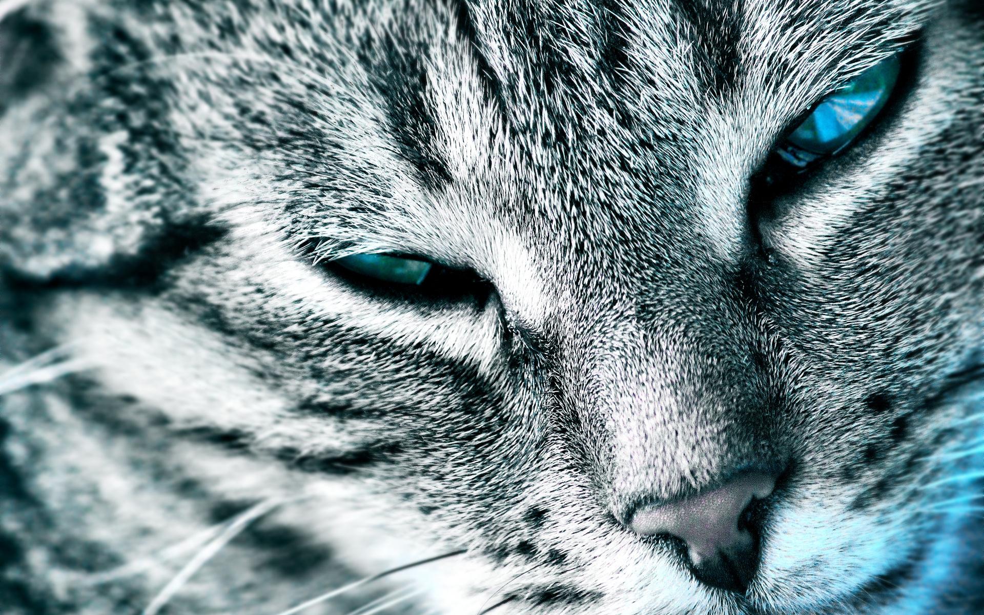 кошка глаза шерсть  № 1963608 бесплатно