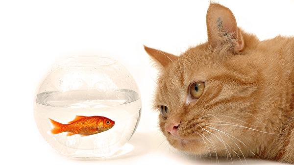 Кот-рыбы мужчина ноябрь 2015