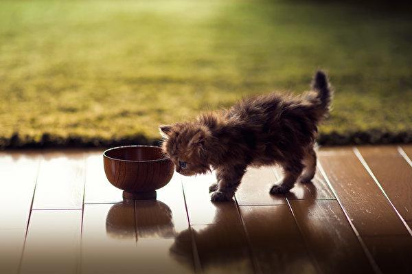 Котенок дейзи фото японский фотограф