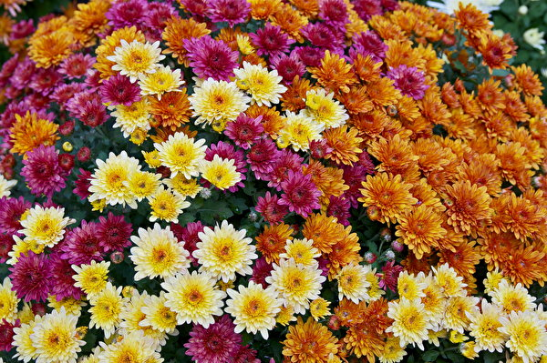 الزهور 319273