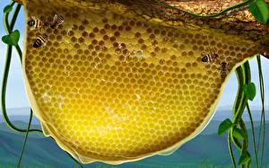 Обои Пчелиные соты животное