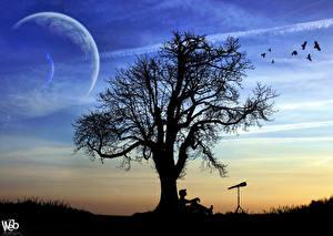 Фотография Векторная графика Силуэт Дерево Природа