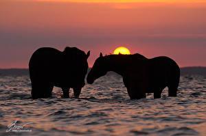 Обои Лошади Вода Силуэт Животные