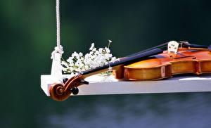 Картинки Музыкальные инструменты Скрипка