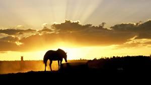 Фотография Лошади Силуэт Лучи света Животные