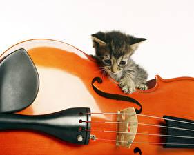 Фото Коты Скрипка Котят Белом фоне животное