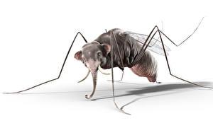 Картинка Слон Комары Юмор
