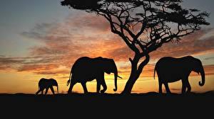 Обои Слоны Африка Силуэт Животные