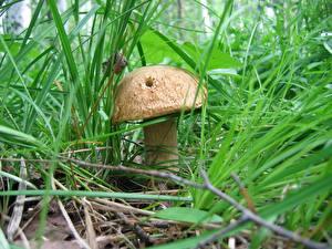 Картинки Грибы природа гриб с дырочкой