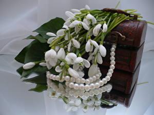 Обои Подснежники Жемчуг цветок