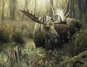 Картинки Лоси Животные