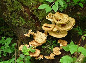 Фотографии Грибы природа