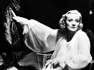 Картинка Marlene Dietrich