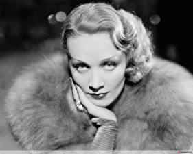 Картинка Marlene Dietrich Знаменитости