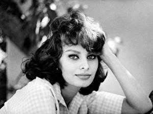 Картинки Sophia Loren