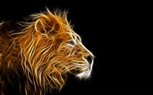 Фотография Львы Большие кошки Голова 3D Графика Животные