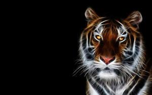 Картинки Тигр Большие кошки Смотрит Морда 3D Графика Животные