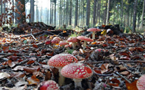 Картинки Грибы природа Природа