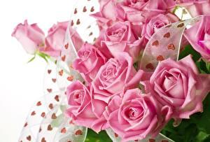 Обои Розы Цветы