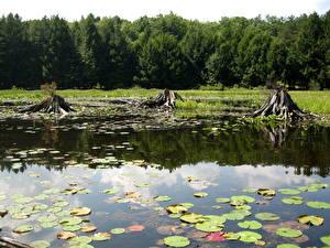 Фотографии Озеро Америка Пенсильвания Black Moshannon State Park Природа
