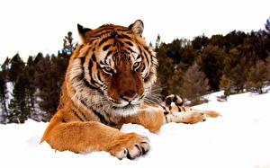 Скачать картинки хищных животных
