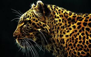 Обои Леопард Большие кошки Усы Вибриссы 3D Графика Животные