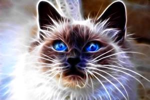 Картинки Кот Глаза Усы Вибриссы Взгляд Морда 3D Графика Животные