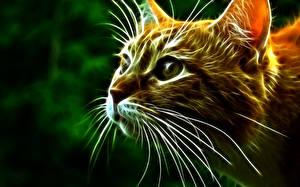 Фотография Коты Глаза Усы Вибриссы Взгляд Морда 3D Графика Животные