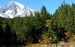 Фото Парки Горы США Маунт-Рейнир парк