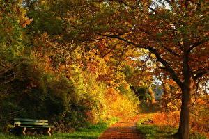 Фото Сезон года Осень Скамейка дорожка Природа