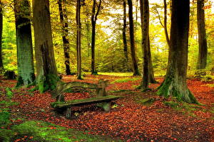 Фотографии Времена года Осенние Лес Скамья Природа