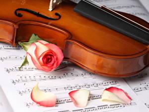 Картинка Музыкальные инструменты Скрипка