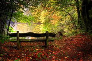 Фотография Времена года Осенние Скамейка старая Природа