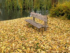Фотография Времена года Осень Скамейка скамейка опавшие листья Природа