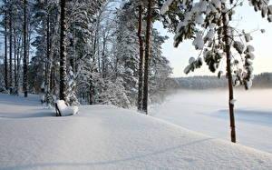 Фотографии Времена года Зимние Скамейка Снег Природа