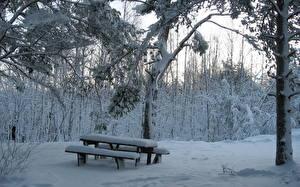 Картинки Времена года Зима Снегу Скамья Дерево Природа