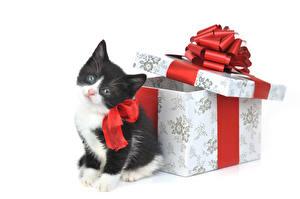 Обои Кошки Подарки Котята Животные